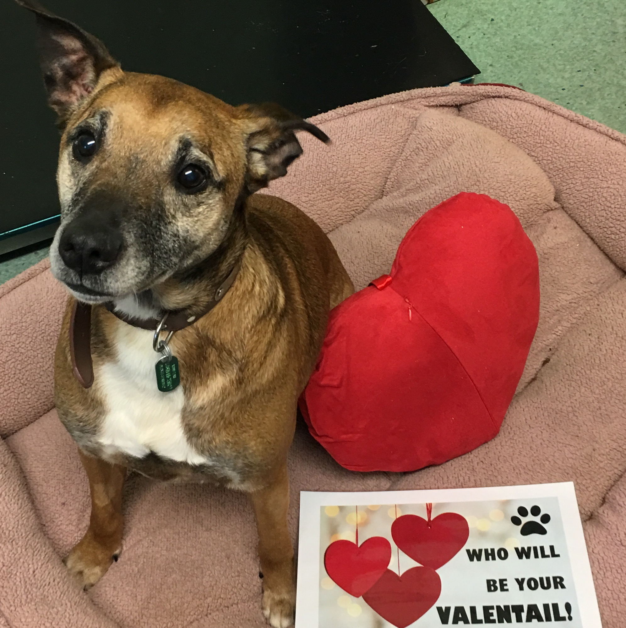 Send Some Love To Local Animals In Need This Valentines