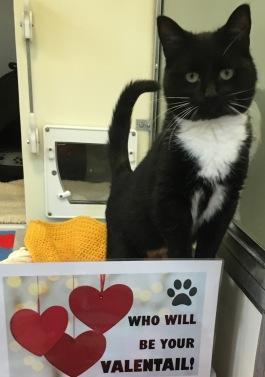 valentails-photo-ivy-female-cat