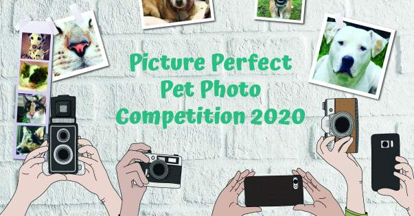 RSPCA Picture Perfect Pet Photo Competition 2020